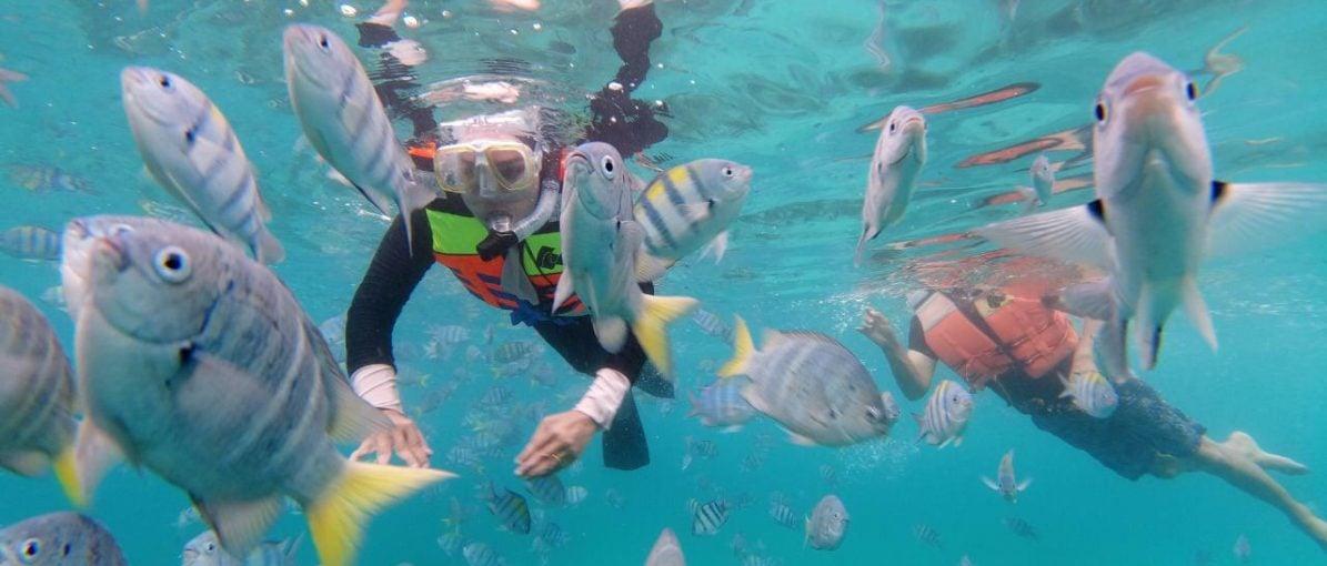Pulau Rubiah, Surga Taman Laut bagi Penyelam