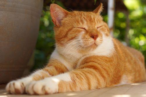 Kucing Oranye adalah Kucing yang Ramah? Berikut Tiga Fakta Menarik Tentang Kucing Oranye