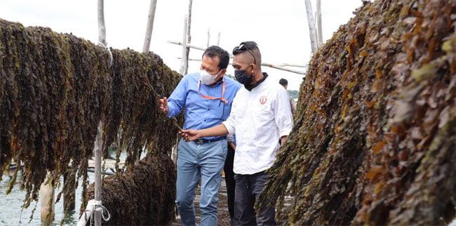 Provinsi Kepri Berpotensi Besar Sebagai Produsen Rumput Laut